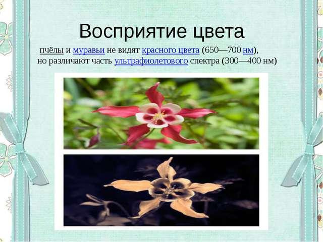 Восприятие цвета пчёлыимуравьине видяткрасного цвета(650—700нм), но ра...