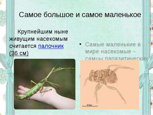 Самое большое и самое маленькое  Крупнейшим ныне живущим насекомым считается...