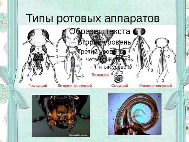 Типы ротовых аппаратов