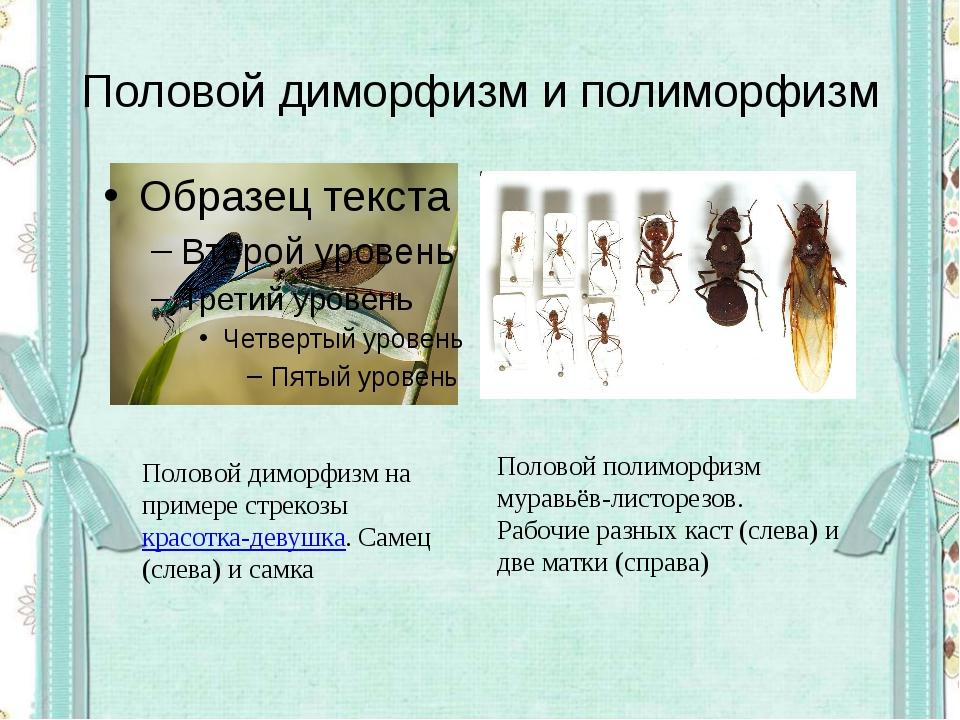Половой диморфизм и полиморфизм Половой диморфизм на примере стрекозыкрасотк...