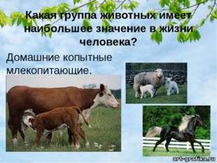 Какая группа животных имеет наибольшее значение в жизни человека? Домашние ко