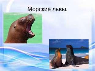 Морские львы.