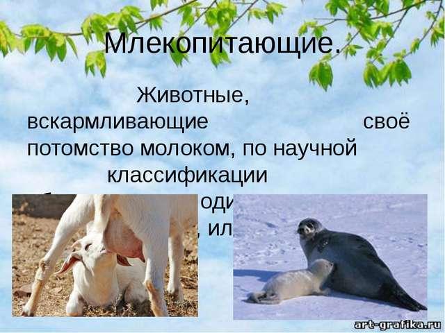 Млекопитающие. Животные, вскармливающие своё потомство молоком, по научной кл...