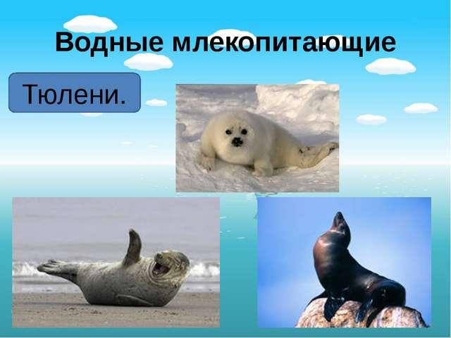 Водные млекопитающие Тюлени.