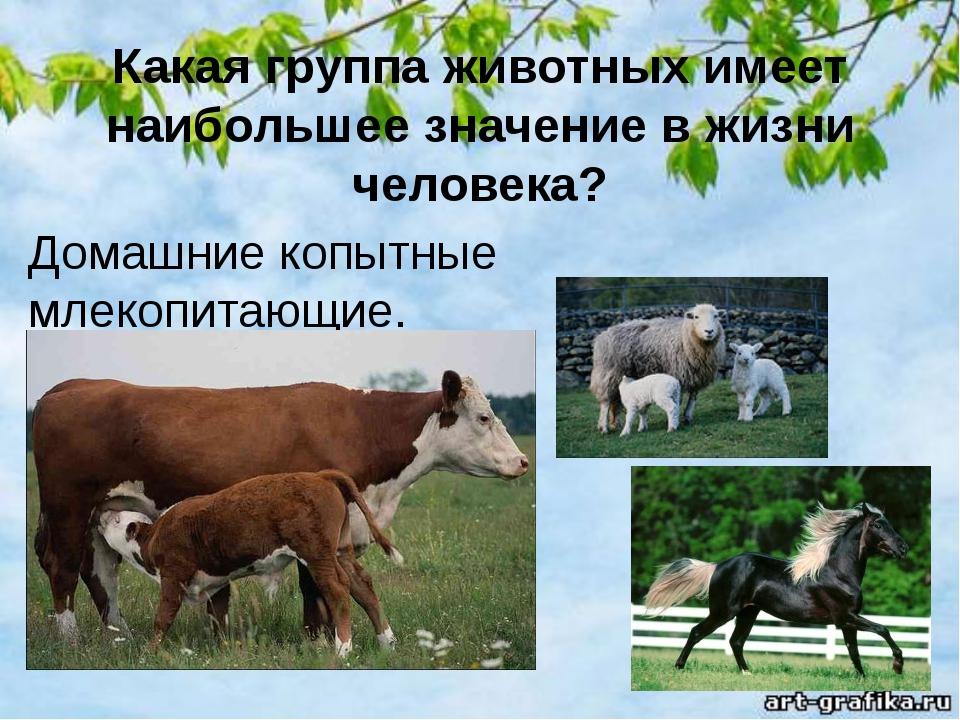 Какая группа животных имеет наибольшее значение в жизни человека? Домашние ко...