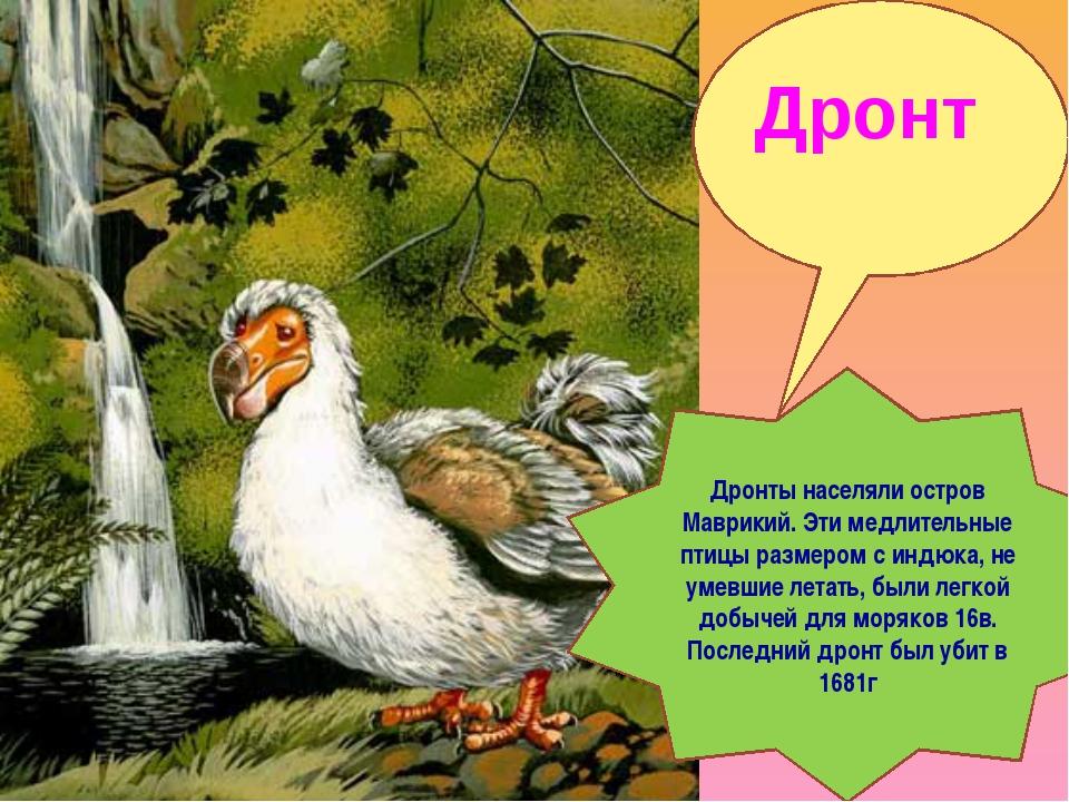 Дронт Дронты населяли остров Маврикий. Эти медлительные птицы размером с индю...