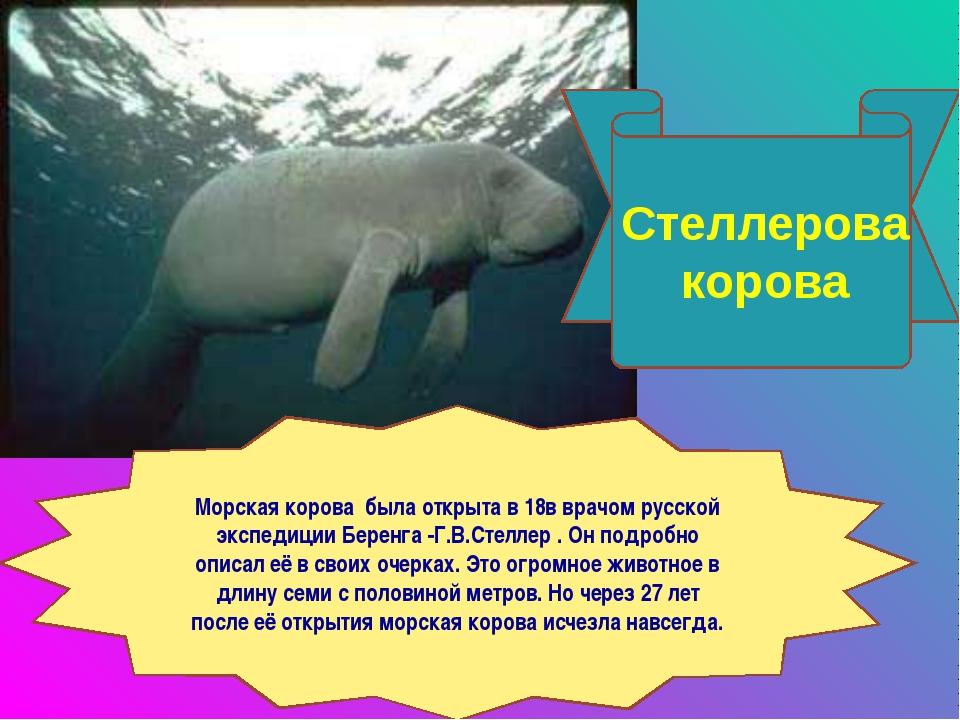 Стеллерова корова Морская корова была открыта в 18в врачом русской экспедиции...