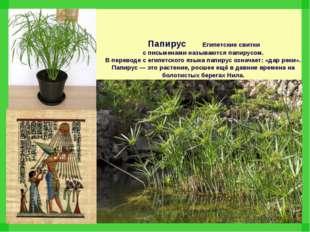 Папирус Египетские свитки с письменами называются папирусом. В переводе с ег