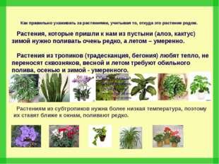 Как правильно ухаживать за растениями, учитывая то, откуда это растение родом