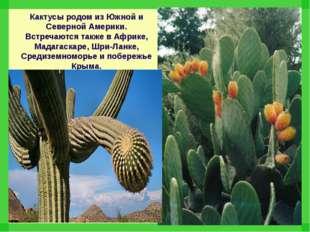 Кактусы родом из Южной и Северной Америки. Встречаются также в Африке, Мадага