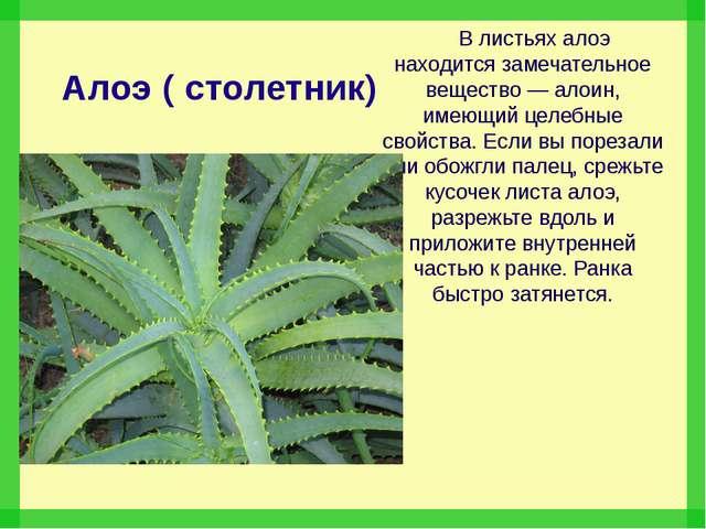 Алоэ ( столетник) В листьях алоэ находится замечательное вещество — алоин, им...