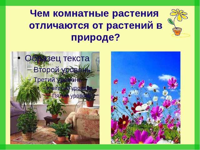 Чем комнатные растения отличаются от растений в природе?