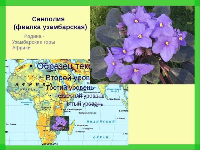 Сенполия (фиалка узамбарская) Родина - Узамбарские горы Африки.