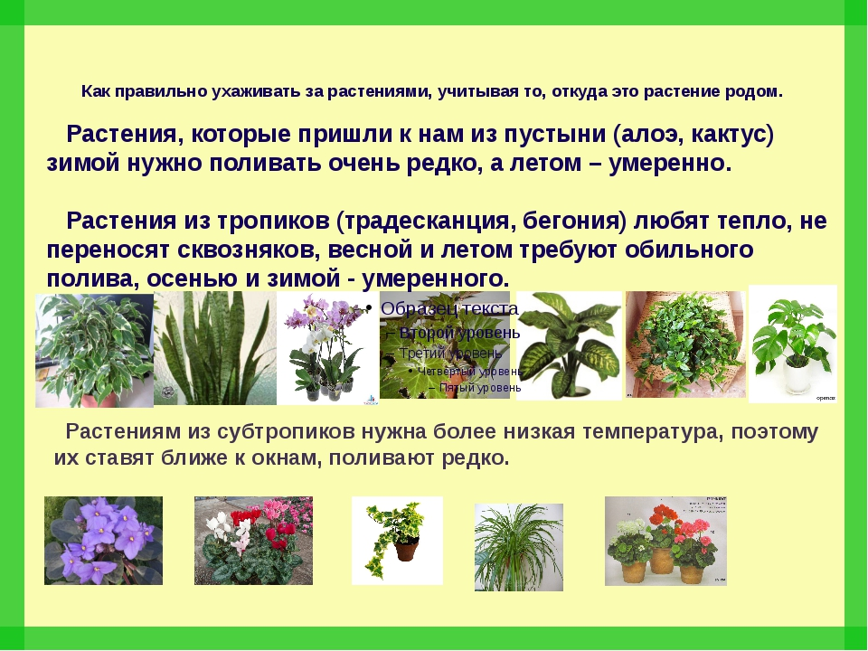 Как правильно ухаживать за растениями, учитывая то, откуда это растение родом...