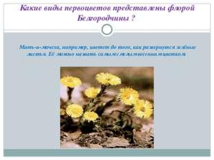 Какие виды первоцветов представлены флорой Белгородчины ? Мать-и-мачеха, нап