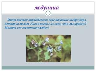Этот цветок оправдывает своё название щедро даря нектар шмелям. Унося цветы