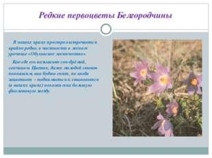 Редкие первоцветы Белгородчины В наших краях прострел встречается крайне редк