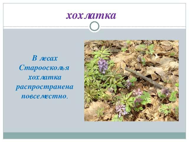 хохлатка В лесах Староосколья хохлатка распространена повсеместно.