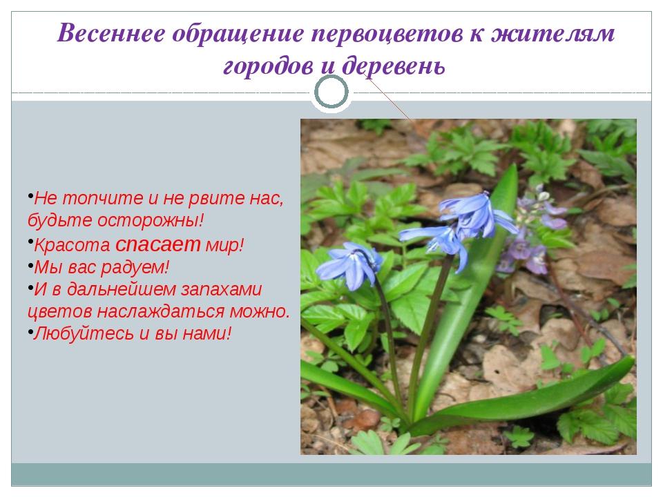 Весеннее обращение первоцветов к жителям городов и деревень  Не топчите и не...