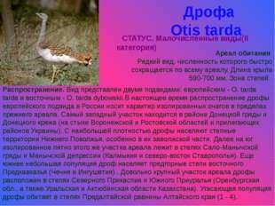 Дрофа Otis tarda СТАТУС. Малочисленные виды(II категория) Ареал обитания Редк