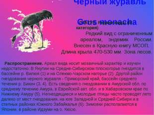 Черный журавль Grus monacha СТАТУС. Редкие виды (III категория) Редкий вид с