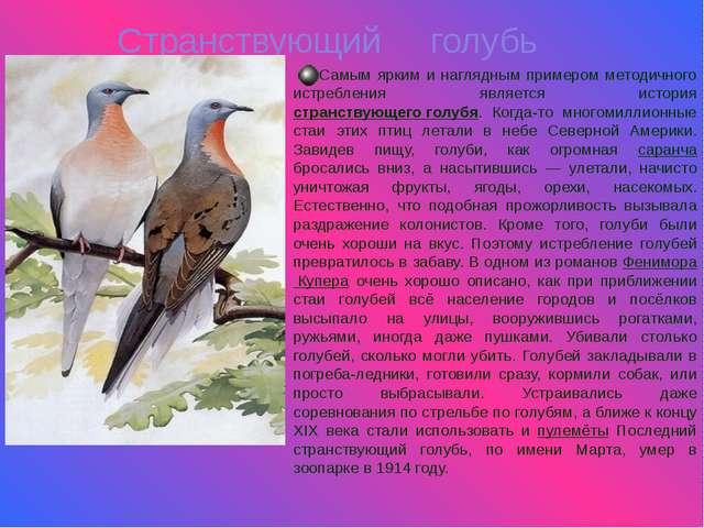 Странствующий голубь Самым ярким и наглядным примером методичного истребления...