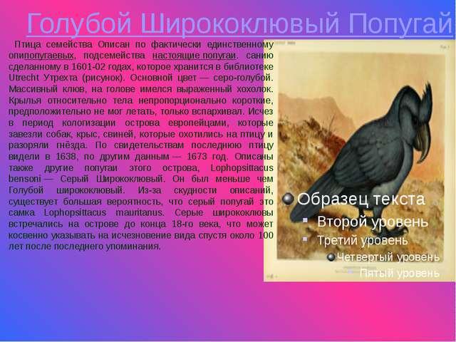 Голубой Ширококлювый Попугай Птица семейства Описан по фактически единственно...