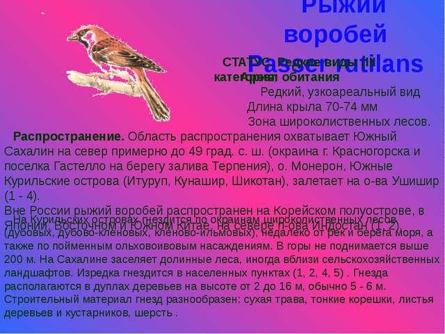 Рыжий воробей Passer rutilans СТАТУС. Редкие виды (III категория) Ареал обита...