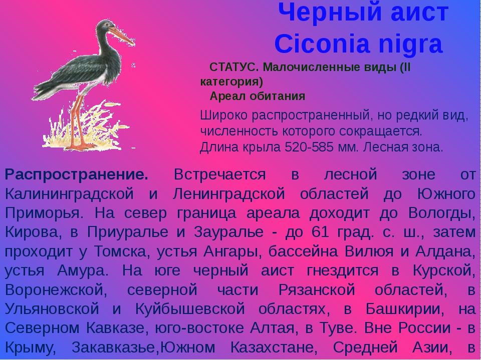 Черный аист Ciconia nigra СТАТУС. Малочисленные виды (II категория) Ареал оби...