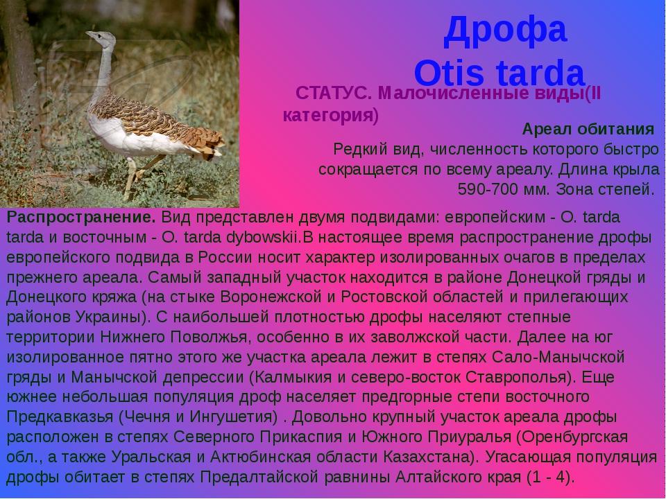 Дрофа Otis tarda СТАТУС. Малочисленные виды(II категория) Ареал обитания Редк...
