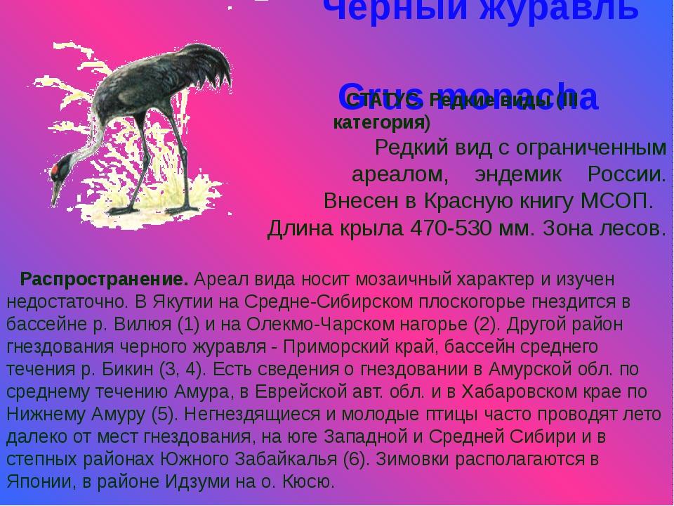 Черный журавль Grus monacha СТАТУС. Редкие виды (III категория) Редкий вид с...