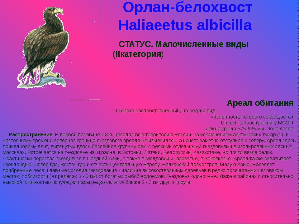Орлан-белохвост Haliaeetus albicilla СТАТУС. Малочисленные виды (IIкатегория)...