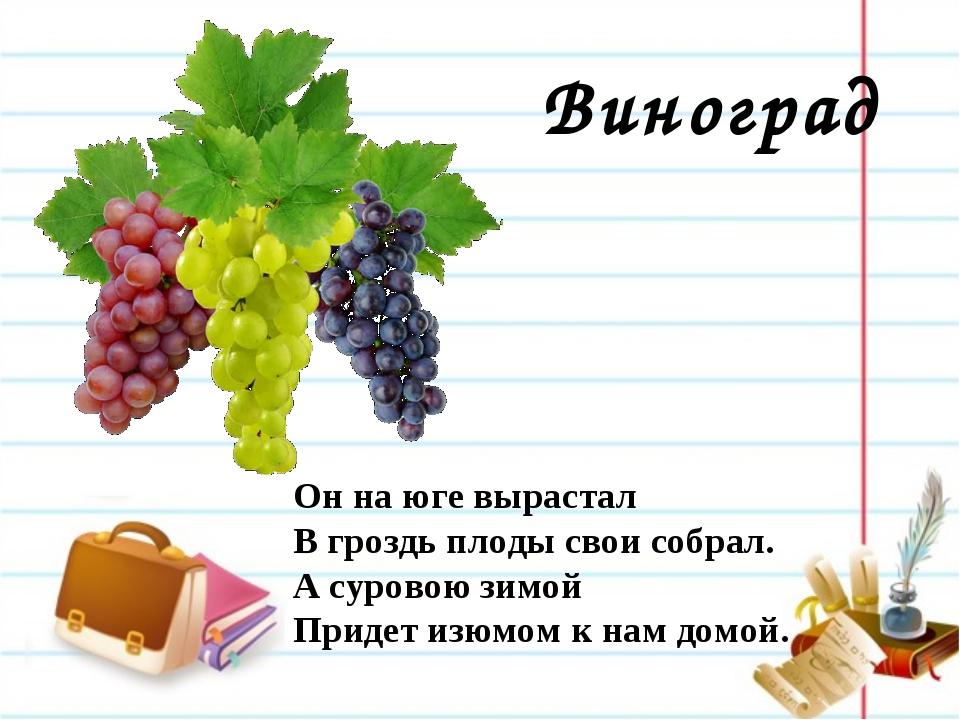 Виноград Он на юге вырастал В гроздь плоды свои собрал. А суровою зимой Приде...
