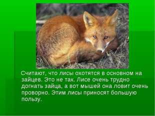 Считают, что лисы охотятся в основном на зайцев. Это не так. Лисе очень труд