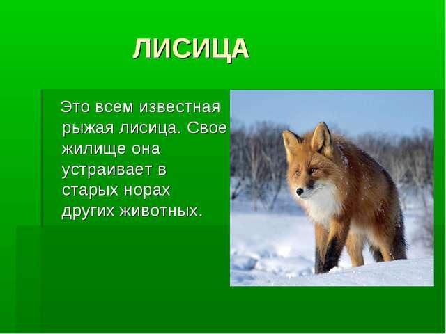 ЛИСИЦА Это всем известная рыжая лисица. Свое жилище она устраивает в старых...