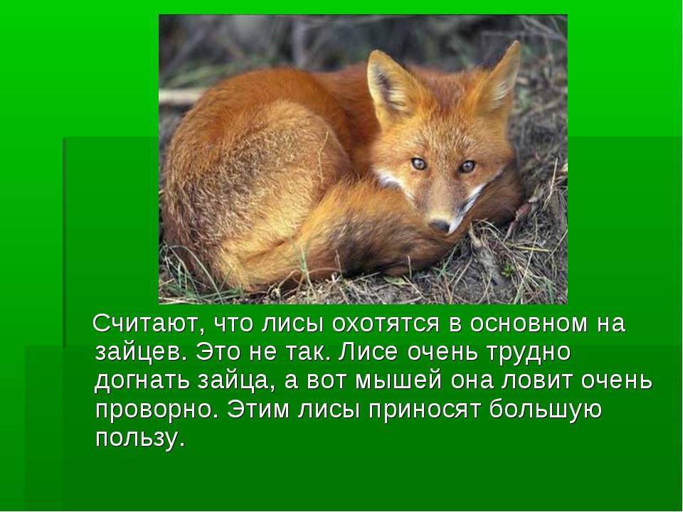Считают, что лисы охотятся в основном на зайцев. Это не так. Лисе очень труд...