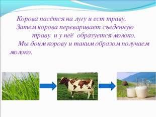 Корова пасётся на лугу и ест траву. Затем корова переваривает съеденную трав