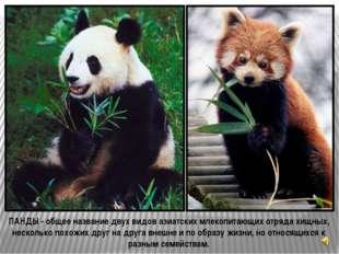 В течение нескольких часов панды с чувством, толком и расстановкой поглощают