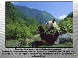 Малая панда (Ailurus fulgens) также известная как красная панда («кошка, окра