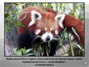 КИТАЙ на глобусе АРЕАЛ – МЕСТО ОБИТАНИЯ панд в Китае