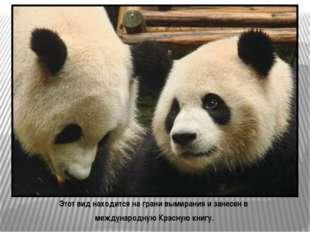 Большая панда – символ Всемирного фонда дикой природы WWF W – WORLD W- WILDL