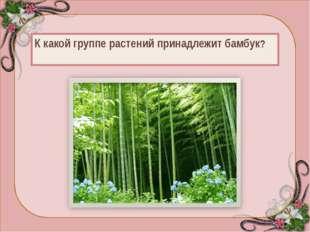 Характерная особенность бамбука — необыкновенно быстрый (у некоторых до 70—8