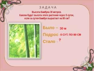 Бамбук – злаковое растение. Приблизительно раз в 50 лет бамбук цветёт и плод