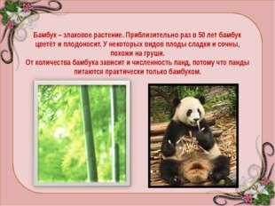 ПАНДЫ - общее название двух видов азиатских млекопитающих отряда хищных, неск