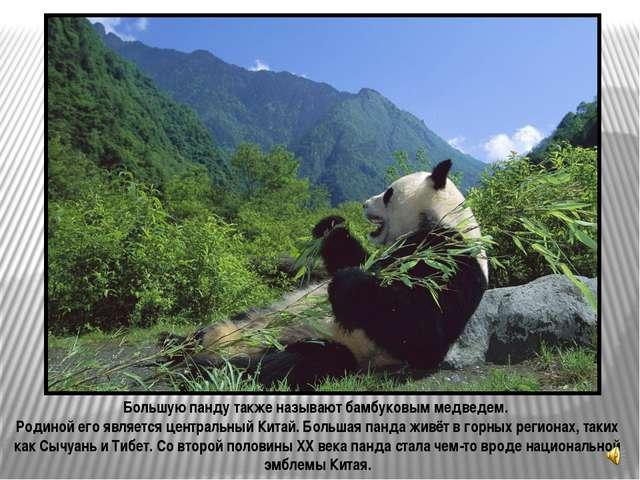 Малая панда (Ailurus fulgens) также известная как красная панда («кошка, окра...