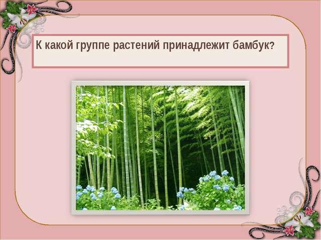 Характерная особенность бамбука — необыкновенно быстрый (у некоторых до 70—8...