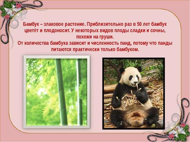 ПАНДЫ - общее название двух видов азиатских млекопитающих отряда хищных, неск...