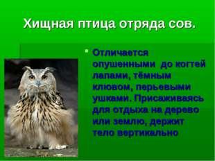 Хищная птица отряда сов. Отличается опушенными до когтей лапами, тёмным клюво