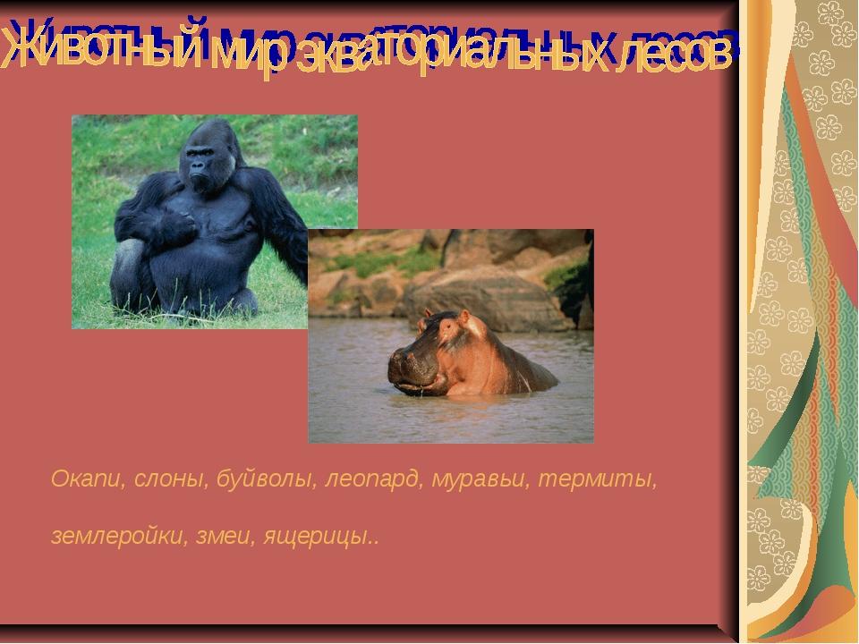 Окапи, слоны, буйволы, леопард, муравьи, термиты, землеройки, змеи, ящерицы..