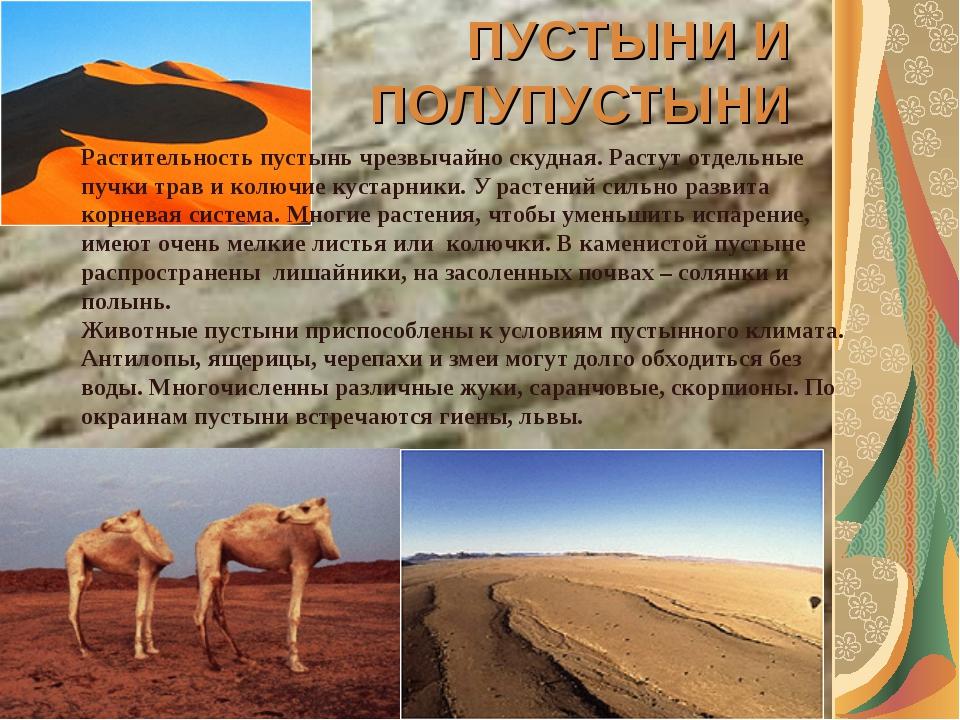ПУСТЫНИ И ПОЛУПУСТЫНИ Растительность пустынь чрезвычайно скудная. Растут отде...